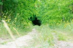 Camino de Sandy que desaparece en el desconocido La frescura en el bosque Foto de archivo libre de regalías