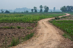 Camino de tierra Fotografía de archivo