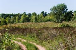 Camino de tierra Foto de archivo libre de regalías