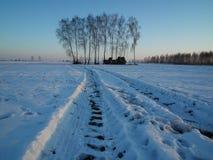 Camino de tierra debajo de la nieve Abedules en el amanecer en un día frío Imagen de archivo