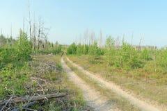 Camino de tierra del bosque en Rusia central Imagenes de archivo