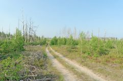 Camino de tierra del bosque en Rusia central Fotografía de archivo libre de regalías