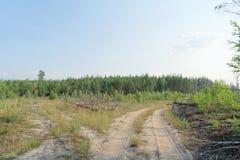 Camino de tierra del bosque en Rusia central Imagen de archivo libre de regalías