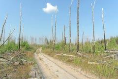 Camino de tierra del bosque en Rusia central Fotografía de archivo