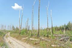 Camino de tierra del bosque en Rusia central Foto de archivo libre de regalías
