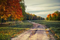 Camino de tierra del otoño entre árboles con las hojas amarillas imagenes de archivo