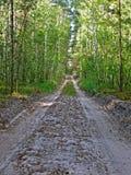 Camino de tierra en abedul-árbol del bosque, Fotografía de archivo libre de regalías