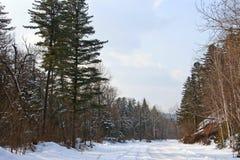 Camino de tierra en bosque fotografía de archivo