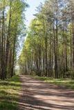 Camino de tierra en bosque de la primavera Fotos de archivo libres de regalías