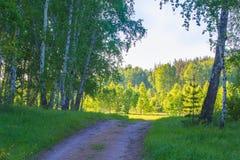 Camino de tierra en bosque del abedul Imágenes de archivo libres de regalías