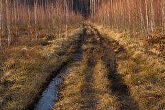 Camino de tierra en bosque del pino y del abedul en Ucrania, Kiev Del camino, salta la hierba seca, primavera Fotos de archivo