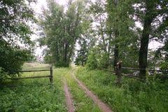 Camino de tierra en el bosque Foto de archivo libre de regalías