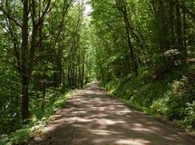 Camino de tierra en el bosque Foto de archivo