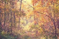 Camino de tierra en el bosque del otoño en un día soleado Fotos de archivo