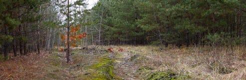 Camino de tierra en el bosque del otoño -- paisaje del otoño Fotos de archivo