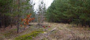 Camino de tierra en el bosque del otoño -- paisaje del otoño Fotos de archivo libres de regalías