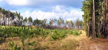 Camino de tierra en el bosque del otoño -- paisaje del otoño, panorama Fotos de archivo