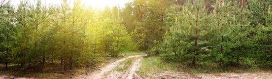 Camino de tierra en el bosque -- paisaje del verano de la primavera, panorama Fotografía de archivo libre de regalías