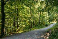 Camino de tierra en el bosque, Stuttgart Foto de archivo