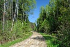 Camino de tierra en el bosque, tiempo de primavera Imagen de archivo libre de regalías