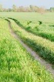 Camino de tierra en el campo de trigo Imagen de archivo