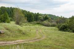 Camino de tierra en la madera Fotografía de archivo