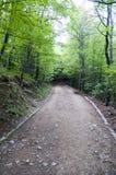 Camino de tierra en la montaña Forest Bulgaria de Vitosha Fotos de archivo libres de regalías