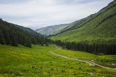 Camino de tierra en las montañas Paisaje de la montaña del verano sendero abajo de la colina a través del bosque en canto de la m foto de archivo libre de regalías