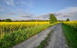 Camino de tierra en los campos Fotos de archivo