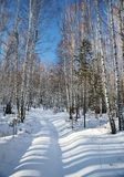 Camino de tierra en un bosque del invierno del abedul Fotografía de archivo
