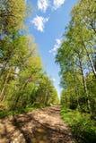 Camino de tierra en un bosque de la primavera Imágenes de archivo libres de regalías