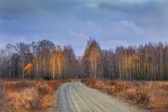 Camino de tierra entre bosque del otoño del abedul Imagen de archivo libre de regalías