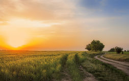 Camino de tierra entre campos del centeno Fotos de archivo