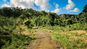Camino de tierra entre el cielo azul de las colinas de la silvicultura con las nubes blancas Foto de archivo