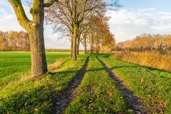Camino de tierra entre una fila de árboles y las plantas de lámina amarilleadas fotografía de archivo libre de regalías