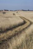 Camino de tierra herboso que desaparece en la distancia imagenes de archivo