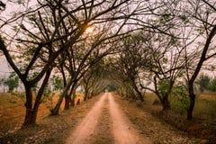 Camino de tierra hermoso con el túnel de árboles y del punto de desaparición en la puesta del sol foto de archivo libre de regalías