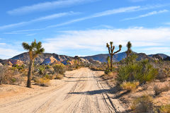 Camino de tierra Joshua Tree imagen de archivo libre de regalías
