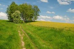 Camino de tierra a la arboleda del abedul en el horizonte Fotos de archivo
