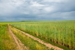 camino de tierra de la suciedad fotos de archivo