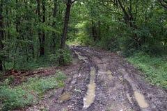 Camino de tierra mojado Fotografía de archivo