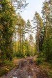 Camino de tierra mojado del otoño Fotos de archivo libres de regalías