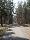 Camino de tierra que lleva a través de una plantación de la silvicultura Fotos de archivo