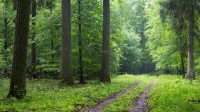 Camino de tierra recto que lleva a través de bosque Foto de archivo