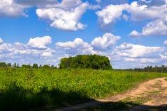 Camino de tierra rural abandonado a través del prado joven en un día de verano brillante, Rusia Imágenes de archivo libres de regalías