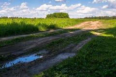 Camino de tierra rural abandonado a través del prado joven en un día de verano brillante, Rusia Imagenes de archivo