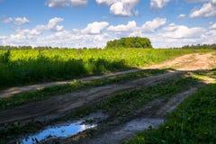 Camino de tierra rural abandonado a través del prado joven en un día de verano brillante, Rusia Imagen de archivo