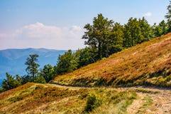 Camino de tierra a través de la ladera con los árboles de haya Foto de archivo