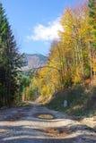 Camino de tierra a través del bosque foto de archivo libre de regalías