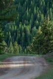 Camino de tierra a través del bosque Imágenes de archivo libres de regalías